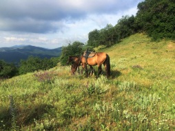 Horses and horizons, Sudak, Crimea